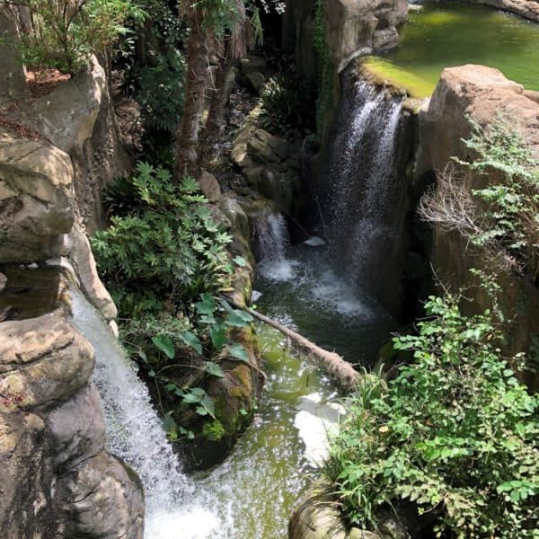 a top view looking down at three waterfalls at the Fort Worth Zoo in Fort Worth Texas.