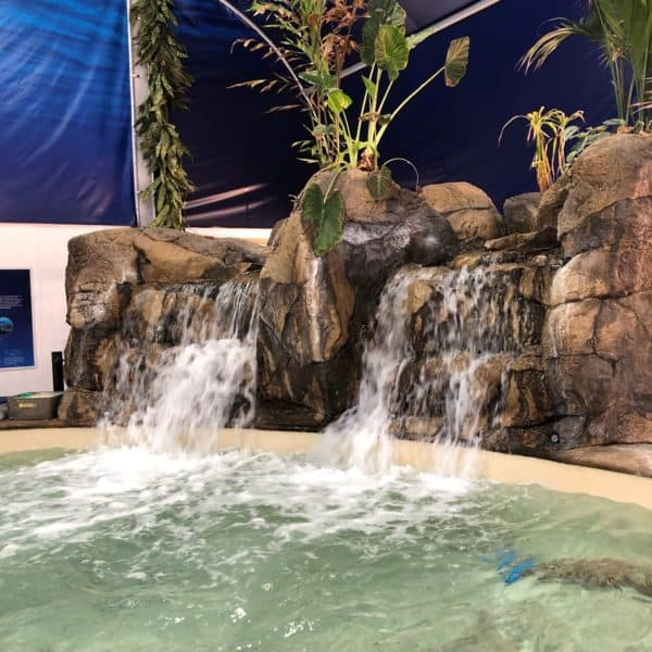 A picture of a waterfall over a stingray exhibit at the Fort Worth Zoo in Fort Worth Texas.
