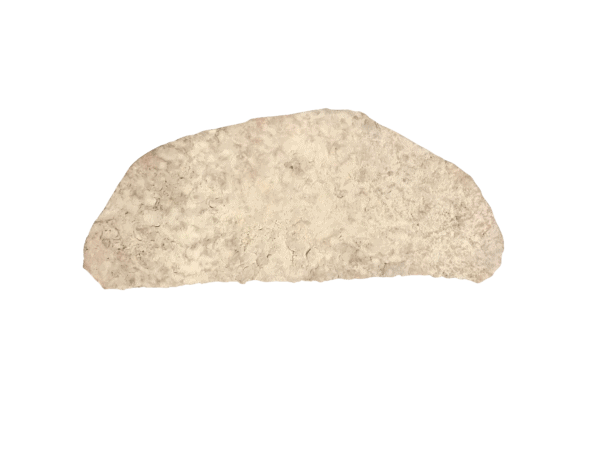 A picture of a seashell concrete stamp for sale with the image background cutout.