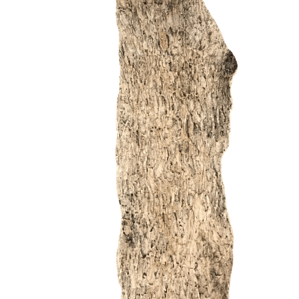 A picture of a tree bark concrete stamp for sale with the image background cutout.